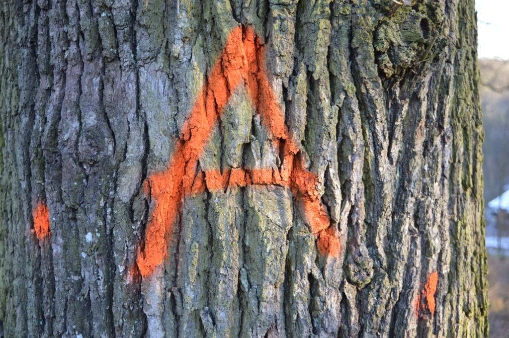 Baumstamm markiert