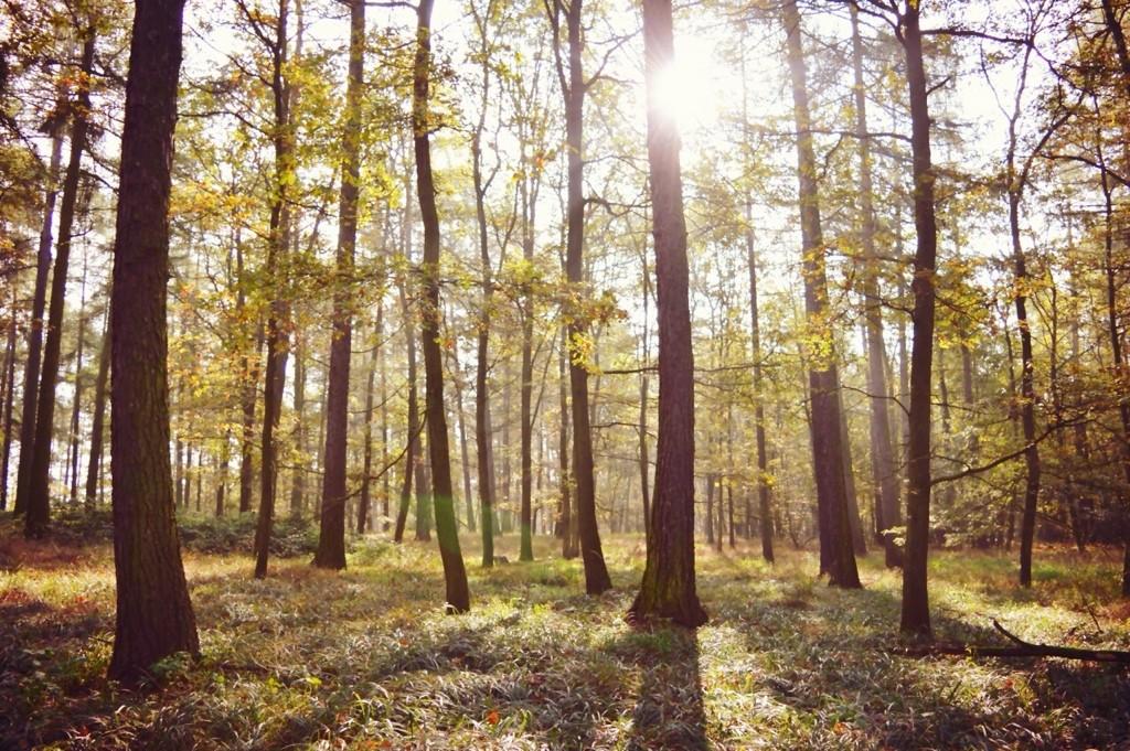 Herbstwald mit Sonne